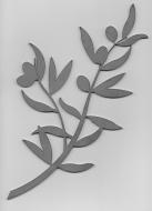 Branche d'olivier ép 4 mm